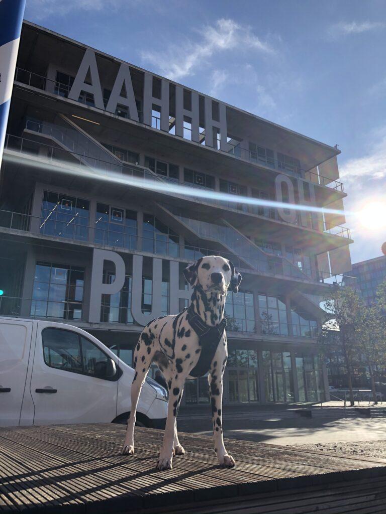 Ein Hund vor dem WERK12 in München