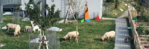 Die Schafe auf dem WERK3